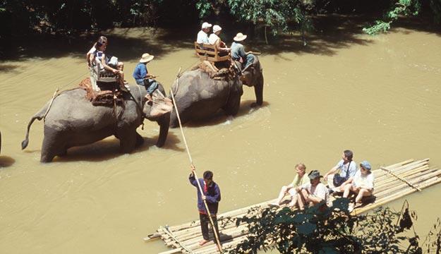 Chiang Mai, Elephant Nature Park
