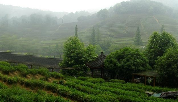 Mei Jia Wu Tea Village