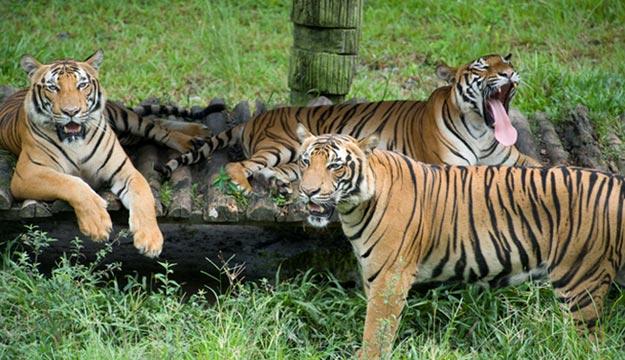 Kota Kinabalu, Lok Kawi Wildlife Park