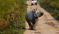 Book flights online to Guwahati and visit Kaziranga National Park
