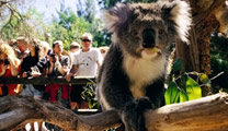 Book cheapest flights to Melbourne and visit Healesville Sanctuary