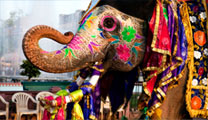 Book the cheapest flights to Chennai and get close to magnificent elephants