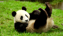 Book and travel to Chengdu with cheapest flights