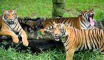 Book flights online to Kota Kinabalu and experience Lok Kawi Wildlife Park