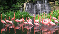 Book cheapest flights to Singapore and visit Jurong Bird Park