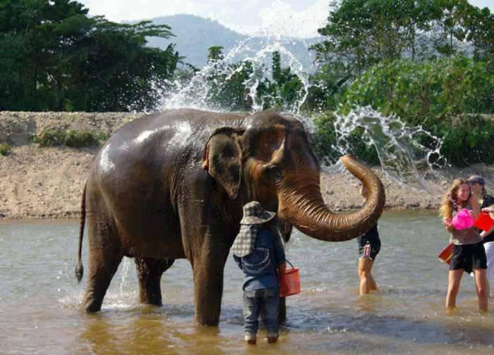 清迈大象自然公园
