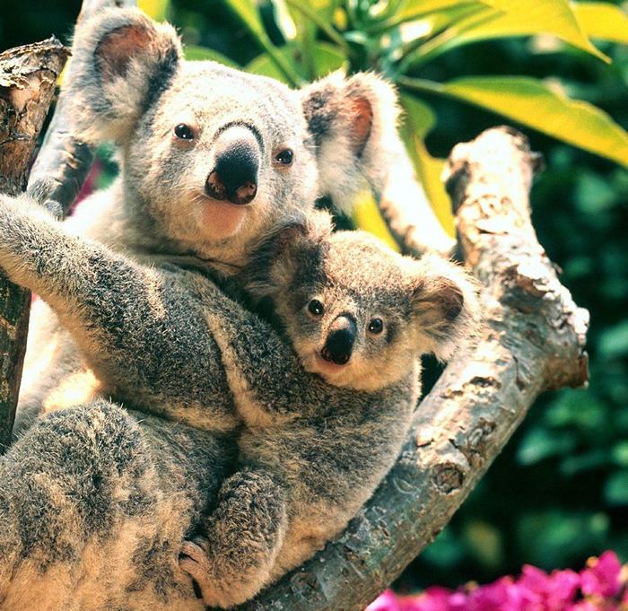 悉尼野生动物园   Wild Life Sydney Zoo