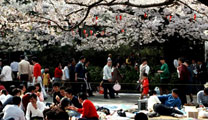 Travel to Tokyo with cheapest airfare and visit Ueno park
