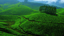 Travel to Kochi with cheapest airfare and experience Munnar Hill Station