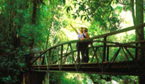 Travel to Gold Coast with cheapest airfare and visit the Springbrook National Park